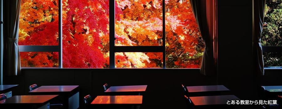 講義室を覗くと、そこには美しい紅葉の絵画が広がっていました。