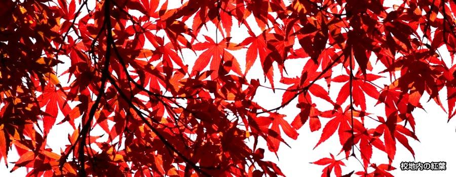 本校の校地には樹木が生い茂り、秋には綺麗な紅葉が見られます。